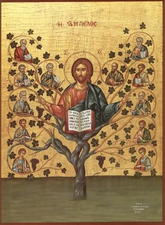 In the Gospel of Saint John, Jesus Christ describes Himself as the vine and His disciples as the branches.